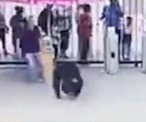 【動画】動物園でチンパンジーが脱走。逃げる男性にドロップキックをするチンパンジーがヤバい!