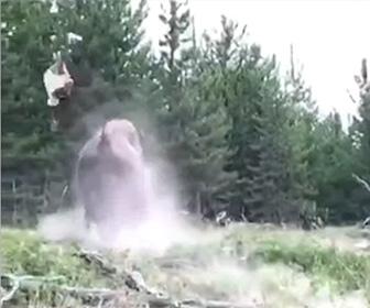 【動画】巨大なバイソンが少女に突進、角ではね飛ばしてしまう衝撃映像