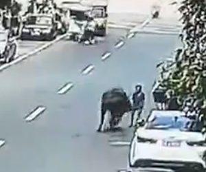 【動画】巨大な水牛が暴れ回り7名を襲い2名が重症を負ってしまう
