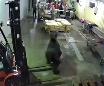 【動画】魚加工工場に巨大なクマが現れ、作業員達が走って逃げる衝撃映像