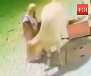 【動画】道を歩くお婆さんと少女が牛に襲われてしまう衝撃映像