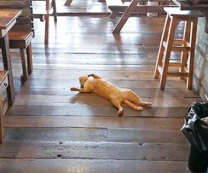 【動画】レストランの床で無防備に寝ているネコが可愛い