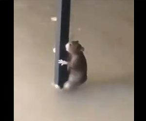 【動画】浸水した家でネズミも水から必死に逃げる衝撃映像
