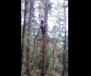 【動画】命綱なしでものすごい勢いで木に登るロシア人男性
