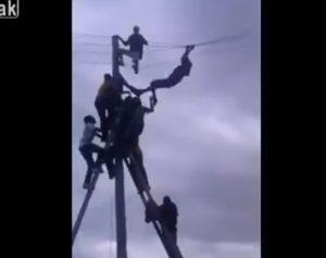 【動画】犬泥棒が電柱に登り必死に逃げようとするが…