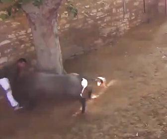 【動画】牛追い祭りで逃げ遅れた男性が暴れ牛にはね飛ばされる衝撃映像