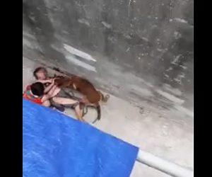 【動画】路地で少年が犬に襲われ母親が必死に助けるが少年は血まみれになってしまう衝撃映像