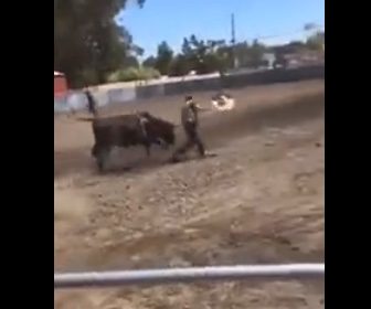 【動画】男性がロデオに挑戦するがすぐに落とされ走って逃げる男性に暴れ牛が襲いかかる
