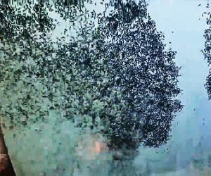 【動画】バーナーの火で大量のシロアリを駆除する映像が凄すぎる