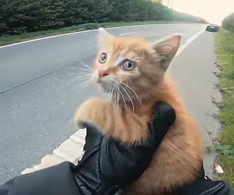 【動画】バイクライダーが道の真ん中で動けない子猫を助けてあげる衝撃映像