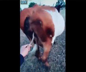【動画】牧場主が歩く牛を止める方法が凄い