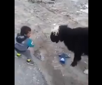 【動画】小さな少年 VS ヒツジ 衝撃の結末