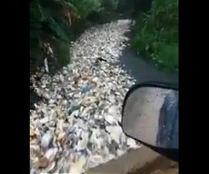 【動画】ドミニカ共和国の川がゴミだらけでヤバすぎる衝撃映像