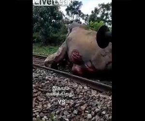 【動画】列車に轢かれてしまったゾウが可哀想すぎる衝撃映像
