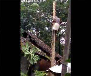【動画】木に登って木を切る男性に悲劇が…