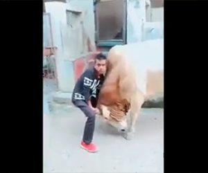 【動画】巨大な牛の角を男性が両手で押さえるが…