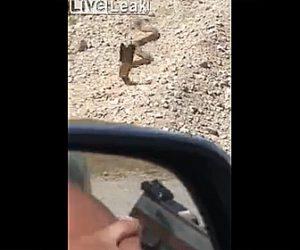 【動画】コブラを銃で撃とうとするが弾が外れコブラが猛スピードで迫ってくる衝撃映像