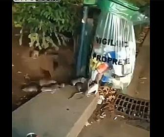 【動画】エッフェル塔のすぐ脇に大量のネズミがいる衝撃映像
