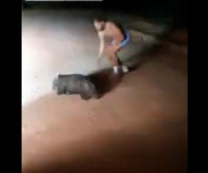【動画】ウォンバットに石を何度も投げつける警官、動画公開され非難殺到