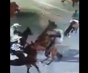 【動画】女性が乗る馬が突然立ち上がり転倒。女性が下敷きになってしまう衝撃映像