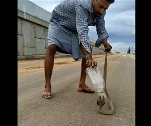【動画】男性が巨大なコブラをペットボトルを使って捕まえる衝撃映像