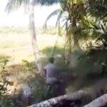 【動画】男性が巨大なヤシの木を切るが倒れた木が男性に直撃してしまう衝撃映像