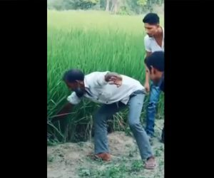 【動画】男性が田んぼに手を入れ、そっとヘビを掴んで引き寄せるが…