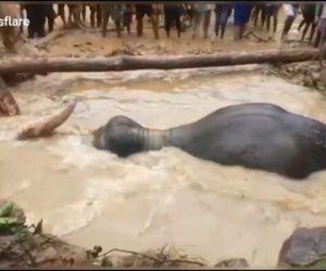 【動画】洪水で浸水した穴にハマった像を村人が必死に救出する衝撃映像
