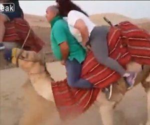 【動画】ラクダに巨漢の夫婦が乗るが重過ぎて…