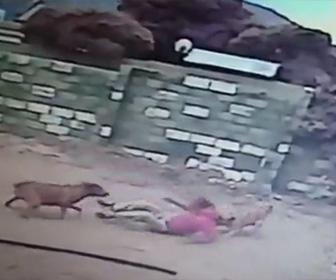 【動画】屋根の上に逃げた泥棒。下りてきた泥棒に番犬2匹が襲いかかる衝撃映像