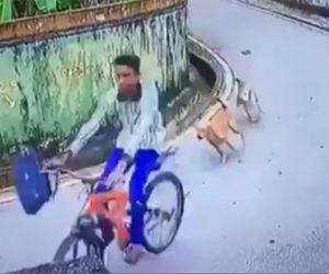 【動画】野犬に追いかけられる少年が必死に自転車で逃げるが…