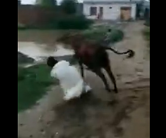 【動画】少年が暴れる牛の手綱を持ち押さえようとするが…