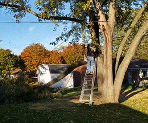 【動画】酔っぱらった男性が脚立に登り大きな木をチェーンソーで斬るが…