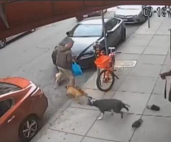 【動画】散歩中の小型犬に2匹のピットブルが襲いかかる衝撃映像