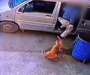 【動画】男が犬を繋いでいる紐を切りバンで連れ去ってしまう衝撃映像