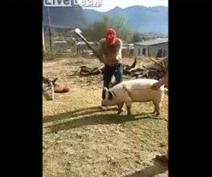 【動画】ブタを縛りハンマーで殴って屠殺しようとするが…