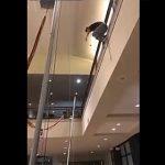 【動画】酔っぱらい男が2階からトランポリンに飛び降りるが…