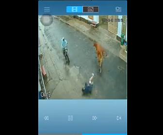 【動画】牛の頭をなでる女性が牛に蹴り飛ばされ…