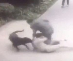 【動画】道を歩く男性が大型犬に襲われる衝撃映像