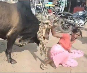 【動画】暴れ牛が次々と歩行者を攻撃。8時間暴走し36人が襲われる衝撃映像
