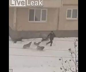 【動画】雪道を歩く男性に野犬の群れが襲いかかる衝撃映像