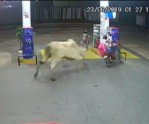 【動画】ガソリンスタンドに入ってきた2人乗りバイクに牛が襲いかかり2人は必死に逃げるが…