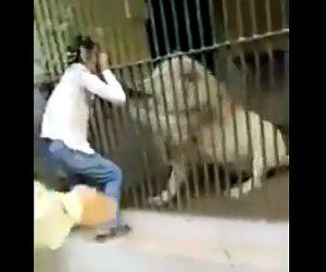 【動画】動物園で飼育員が檻越しにホワイトライオンに襲われる衝撃映像