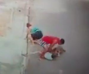 【動画】小さな男の子が犬に襲われ男性が必死に助ける衝撃映像