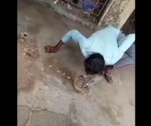 【動画】ヘビ使いがコブラにキスとしようとするが唇を噛まれてしまう衝撃映像