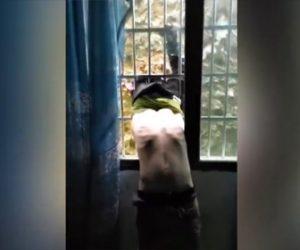 【動画】泥棒が窓の鉄柵にはまり身動きが取れない所を発見される衝撃映像