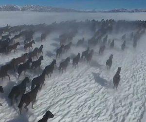 【動画】1万頭の馬が中国の雪原を走る映像が凄い