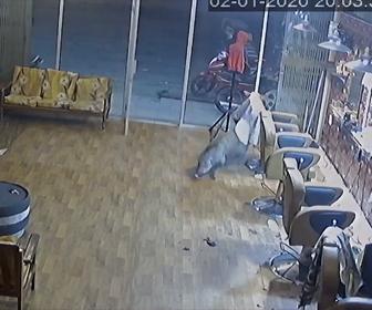 【動画】美容室にイノシシが飛び込んでくる衝撃映像