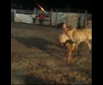【動画】女性VS暴れ牛 暴れる牛を女性が押さえつけようとするが…
