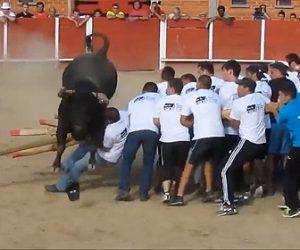 【動画】暴れ牛VS人間30人 丸太の盾を持った30人に暴れ牛が襲いかかる衝撃映像